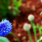 Little Blue Flower with unique focus by weaverkjw