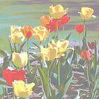 Tulip Garden by weaverkjw
