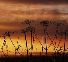 Sunset Silhouettes. by Aj Finan