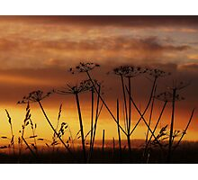 Sunset Silhouettes. Photographic Print