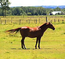 Lone Horse by HALIFAXPHOTO