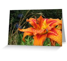 Gorgeous flame-like daylilly - a golden statement! Greeting Card