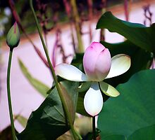 Lotus Bud by Mattie Bryant