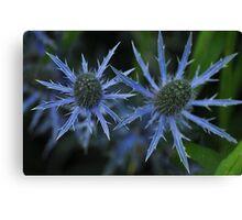 Sea Holly - Eryngium zabelii 'Big Blue' Canvas Print