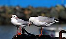 Seagulls Waiting For Lunch by Evita
