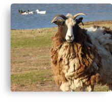 Goat fur. Canvas Print