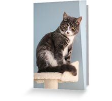 What 'mew Lookin' at? Greeting Card