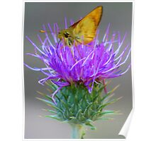 Butterfly on Thistle Poster