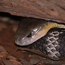 Eastern Brown Snake by NickBlake