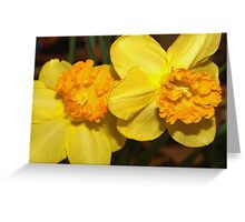 Two yellow daffodils Greeting Card