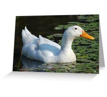 Friendly Duck Greeting Card