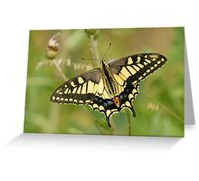orange butterly Greeting Card