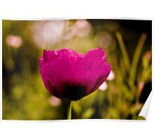 English Garden - Poppy  Dream Poster
