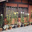 Japanese garden shop display. Kyoto. by johnrf