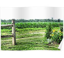 Farm Land....Corn Field Poster