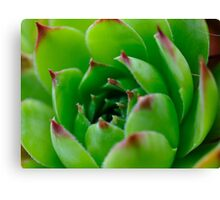 Green in Macro Canvas Print