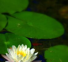 Just Float... by LindaR