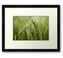 Unfolding before your eyes Framed Print