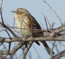 Bird on a branch. Sticker