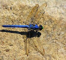 Dragonfly by Tony Wilder
