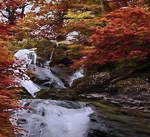 Silver Falls Through Golden Trees by JohnYoung