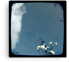 Sky flower Canvas Print