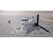 The Opportunists! Semaphore Beach, winters day!  Photographic Print