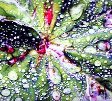 Raindrops by Merice  Ewart-Marshall - LFA
