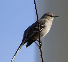 Bird on a wire. by PhotosByNita