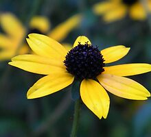 Black Eyed Susan Floral Art by naturesfancy
