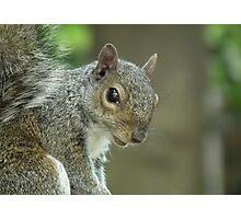 Squirrel 2 Photographic Print