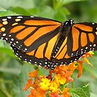Orange Butterfly and Lantana Flowers Art by naturesfancy