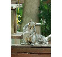 Squirrel 4 - please sir can I have some more? Photographic Print
