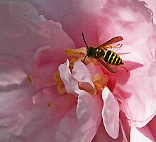 Honey Bee on Pink camellia Art by naturesfancy