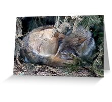 Mackenzie Valley Wolf - (Canis lupus occidentalis) Greeting Card