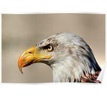 Eagle Profile Poster