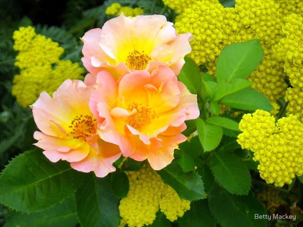 Golden Beauty by Betty Mackey