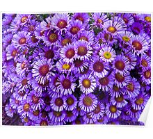 Purple wall Flowers Poster