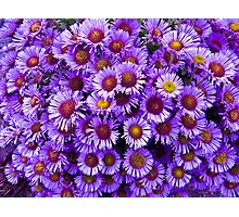 Purple wall Flowers Photographic Print