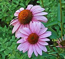 Artistic Pink Cone Flower Design by naturesfancy