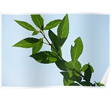 Bush leaves in Wakarusa Poster