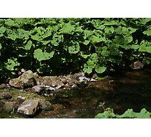 green stream Photographic Print