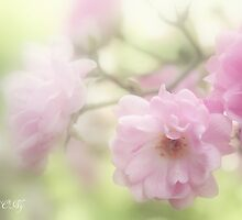 Rose collection 6 by aMOONy