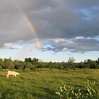 Rainbow Pasture by L J Fraser