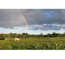 Rainbow Pasture Photographic Print