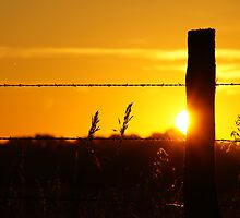 Sun peeking around a fencepost by agenttomcat