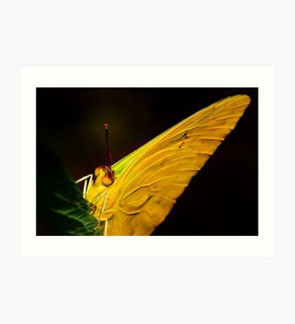 Orange Banded Sulphur Butterfly Close Up Art Print