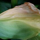Hosta close up by selca6