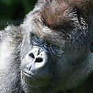 gorilla by ClaireTiltman