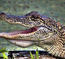 Gator by Savannah Gibbs